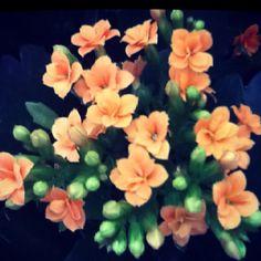 Flowers: Calanchoe English Flowers, Pot Plants, Super Greens, House Plants, Color Mixing, Beautiful Flowers, Gardening, Joy, Edible Flowers
