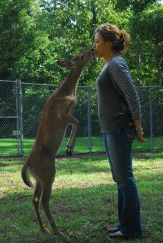 my friend lexi and her pet deer Pet Deer, Kangaroo, My Friend, Pets, Animals, Baby Bjorn, Animales, Animaux, Animal