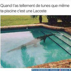 Le désespoir quand tu découvre un animal de type carnivore dans ta piscine le matin...