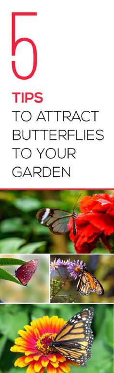 Check these simple and effective ideas for attracting butterflies to your garden.