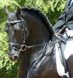 The Friesian Horse Society, International registration for Friesian Horses in North America, including B Book and D book horses and Friesian Part-breds.