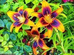 Flores do Meu Jardim.. (Trio Maravilha.. )
