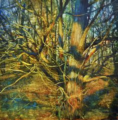 David Dunlop- Entangled Cedar, Oil on laminated aluminum, 24 x 24 inches Cedar Oil, David, Martini, Woods, Paintings, Watercolor Painting, Cedarwood Oil, Paint, Woodland Forest