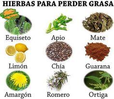 hierbas para adelgazar estomago de lado