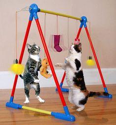 Tô procurando uns brinquedos de criança para adaptar e fazer um desses para meus felinos...rsrsrs