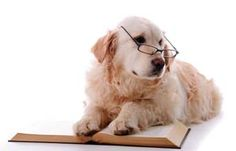 Dogs are about as smart as a two- or three-year-old child. This means they can understand about 150-200 words, including signals and hand movements with the same meaning as words. http://thepoophappens.com