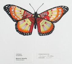 Phillippa Bentley - Monarch Butterfly