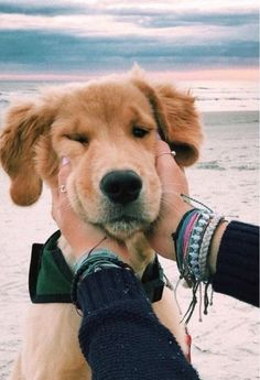 This lovely puppy golden retriever will make you happy. Dogs are awesome companions. Cute Baby Animals, Animals And Pets, Funny Animals, Animals Images, Cute Dogs And Puppies, I Love Dogs, Doggies, Pet Dogs, Doggie Beds