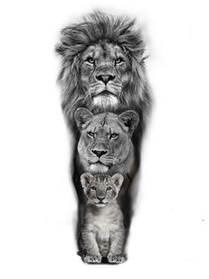 # Tätowierung für Männer tattoo quotes tattoos tattoos tattoo fonts for men meaningful quotes quotes about life quotes latin quotes motivational Lion Head Tattoos, Mens Lion Tattoo, Wolf Tattoos, Body Art Tattoos, Tatto Man, Stomach Tattoos, Tattoos Skull, Tattoo Drawings, Unique Tattoos