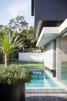 This Sydney garden features an in-ground swimming pool and tennis court. A bespoke metal planter is complemented by the featured Dracaena draco.