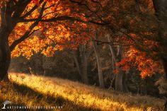 Autumn colours by Artur Szczeszek on 500px