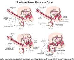 An aroused vagina