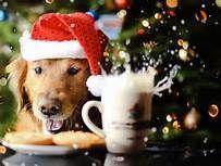 χριστούγεννα dog - Yahoo Image Search Results