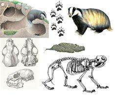 Animal Tracks, Montessori Materials, Nature Journal, Living Room Art, Mother Earth, Hogwarts, Woodland, Kindergarten, Moose Art