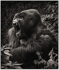 Amazing Animals Photography by Nick Brandt