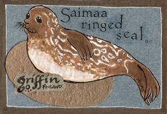 Saimaannorppa > Saimaannorppa (Pusa hispida saimensis) Seals, Finland, Christmas Ornaments, Holiday Decor, Animals, Home Decor, Drawings, Animales, Decoration Home