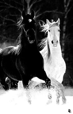 Horse - Stéphanie P - Tierbabys, Tierkinder, Wallpapers Tiere, Animals Wallpapers - Pferde Majestic Horse, Majestic Animals, Most Beautiful Animals, Beautiful Creatures, Beautiful Pictures, Zebras, Animals And Pets, Cute Animals, All The Pretty Horses