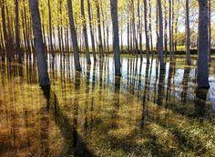 Magical forest in Nafarroa