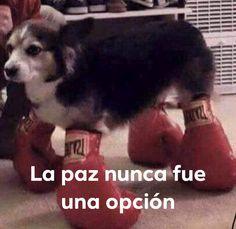 No tengo vida kok kok solo veo memes kok kok me quiero morir kok kok. Reaction Pictures, Funny Pictures, Memes Lindos, Dankest Memes, Jokes, 5 Anime, Spanish Memes, Meme Faces, Mood Pics