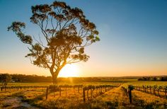 World's 10 Best Trips for Wine Lovers
