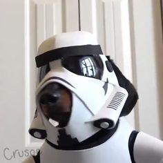 Wiener Trooper