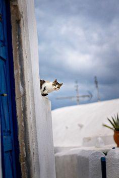 Curious kitty in Santorini, Greece