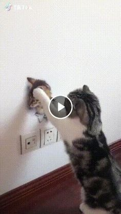 Animals Discover Cats memes laugh so hard kitten 40 trendy ideas - Cats - Cat Memes Funny Cat Memes Funny Cat Videos Funny Cats Humor Videos Funny Humor Little Kittens Cats And Kittens Cute Funny Animals Cute Cats Funny Cat Memes, Funny Animal Videos, Cute Funny Animals, Cute Cats, Funny Cats, Videos Funny, Funny Humor, Cats Humor, Pet Videos