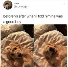 Just viral funny animals memes for you. If you ever think that animals are not funny, these 60 funniest animal Funny Animal Jokes, Cute Funny Animals, Animal Memes, Funny Cute, Funny Dogs, Animal Quotes, Hilarious, Cute Puppies, Cute Dogs