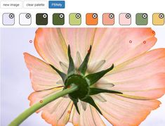 How to Turn a Photo into Paint by Numbers With PBNify 1