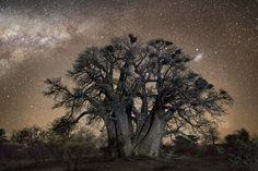 Diamonds nights, de Beth Moon / Árboles bajo las estrellas