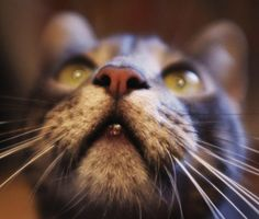 How Dog and Cat Whiskers Work
