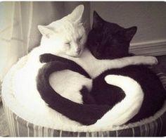 Animali Innamorati