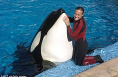 Dawn Brancheau was drowned when an orca named Tilikum dragged her to her death. SEAWORLD lost a GREAT trainer, and then tried to destroy her character and work ethic upon her death at their park. Well today, Seaworld LOST their appeal against OSHA. SCORE 1 for HUMANITY!