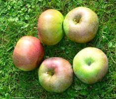 Apples, Ontario, Fruit, The Fruit, Apple
