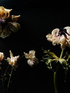 Stunning image of wilting flowers.