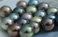 Tahitian Black Pearls- titanium iridescence