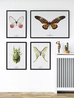 Plakat Hagedornhagen- motyl | Designzoo
