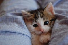 12 kittens who will make you feel better about it being Monday again