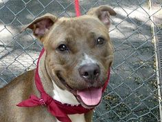 DIAMOND...NYC...PetHarbor.com: Animal Shelter adopt a pet; dogs, cats, puppies, kittens! Humane Society, SPCA. Lost & Found.