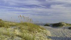 Sea Oats near the Point, Emerald Isle, NC