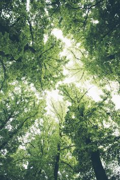 Wallpaper for your phone, wild flowers, beautiful world, trees beautiful, b Dark Green Aesthetic, Rainbow Aesthetic, Nature Aesthetic, Aesthetic Colors, Aesthetic Pictures, Beautiful World, Beautiful Places, Trees Beautiful, Terre Nature