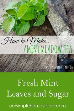 How to make Amish Meadow Tea: Boil one gallon of water in a stock pot and remove from heat once the Fresh Mint Tea, Mint Iced Tea, Fresh Mint Leaves, Mint Recipes, Tea Recipes, Coffee Recipes, Recipies, Mint Leaves Recipe, Mint Water