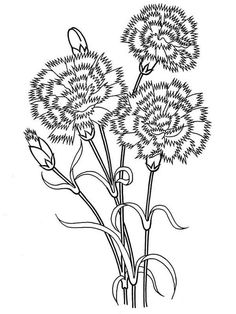 Carnation flower coloring pages. Download and print Carnation flower coloring pages