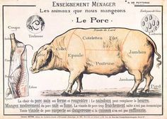 Cuts of Pork, illustration from a French Domestic Science Manual by H. de Puytorac, published by Editions Fernand Nathan, late century (colour litho) by French School Barbecue, Bbq Pork, Fernand Nathan, Lard, Pimento Cheese, Thing 1, Vintage Wall Art, Vintage Ads, Vintage Food