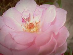 Porque eu gosto évde rosas, de rosas,  de rosas (8