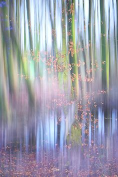 In The Spring Woods. Impressionism by Jenny Rainbow