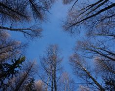 Luokasta luontoon -materiaali Clouds, Snow, Plants, Outdoor, Outdoors, Planters, Outdoor Games, Outdoor Living, Plant
