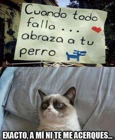 New memes chistosos humor grumpy cat ideas Memes Humor, New Memes, Funny Cat Memes, Funny Cats, Funny Animals, Cute Animals, Hilarious, Super Cat, Frases Tumblr