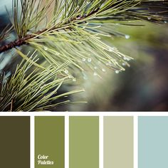 Green an color schemes, сolor palette Colour Pallette, Colour Schemes, Color Combinations, Green Color Palettes, Winter Color Palettes, Green Palette, Nature Color Palette, Winter Colors, Colorful Decor