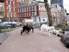 Best of New York: Little Bay Park Dog Run in Queens tops our list of dog parks Bayside Queens, York Dog, Dog List, Dog Runs, Dog Park, Best Cities, Best Dogs, Parks, Street View